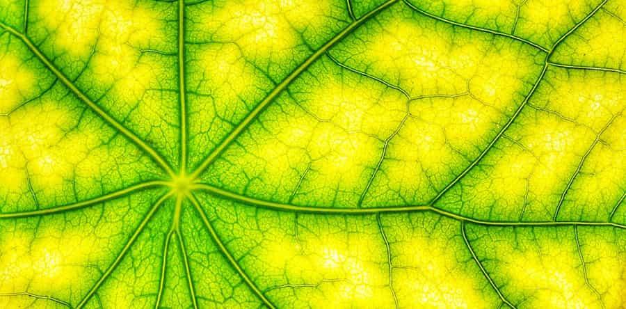 chlorophyll and hemoglobin